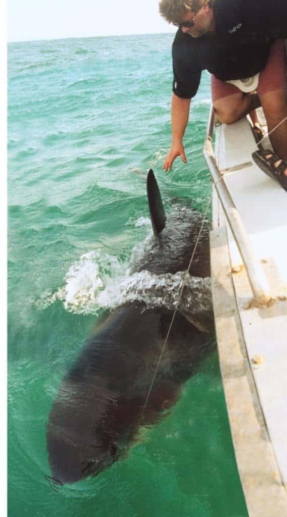 Des Taylor shark fishing