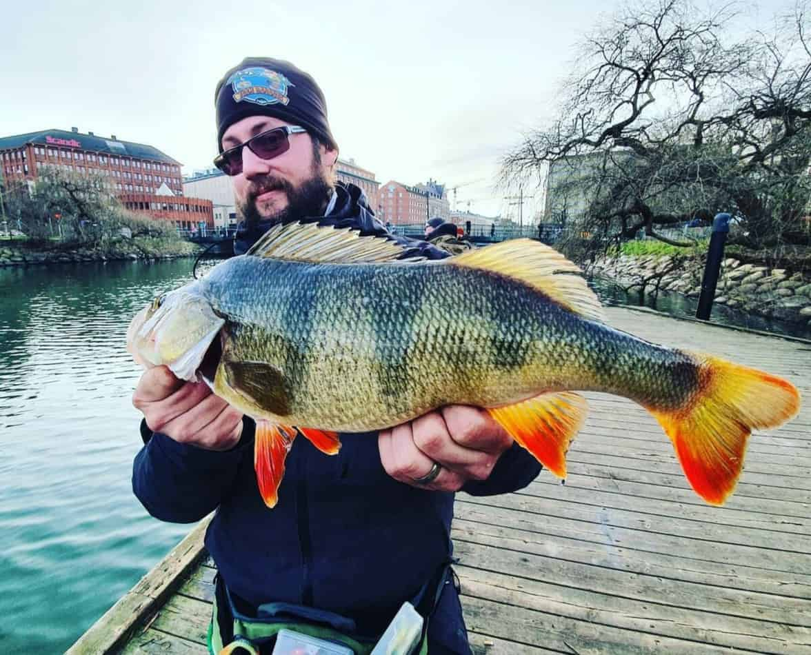 When Can You Fish for Perch Without a Wire Trace